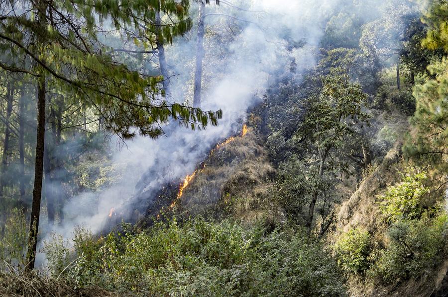 Wildfire Prevention in Auburn, WA