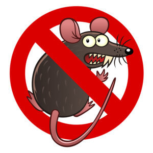 rodent insurance coverage for your car in Auburn, WA
