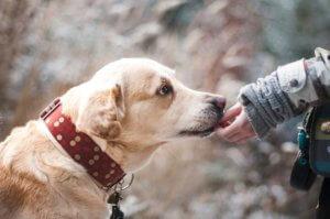 Liability Insurance for Dog Bite Claims Auburn, WA